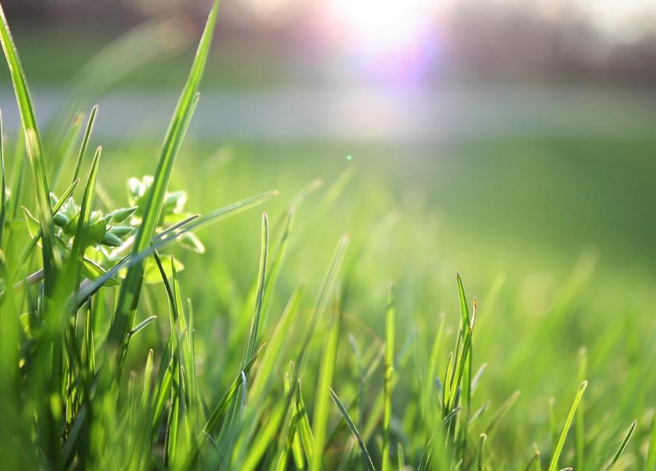 Het gras bij de buren is altijd groener